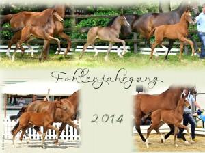 Fohlenjahrgang 2014